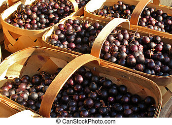 Grapes in baskets 2 - Freshly picked grapes for sale at an...
