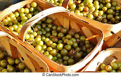 Grapes in baskets 3 - Freshly picked grapes for sale at an...