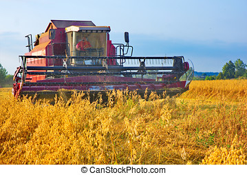 harvest home - Combine decimated the ears of grain