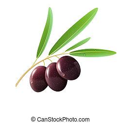 Black olives - illustration of detailed black olives with...