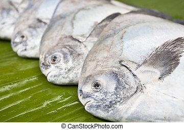 Black pomfret fishes on banana leaf