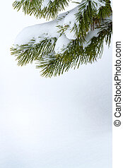 Fir branch under snow - Branches of a winter spruce tree
