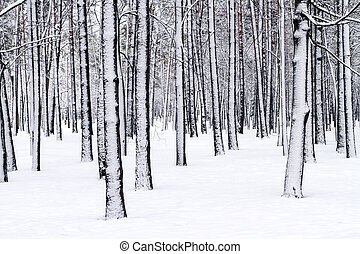 Winter wonderland - Snow covered bare trees in forest