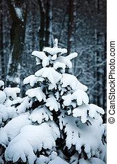 Winter fir tree