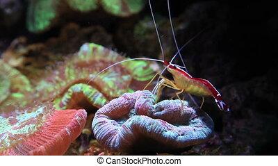 shrimp - marine life
