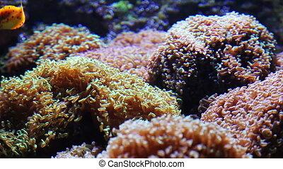 reef - marine life