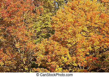 October in Cuyahoga Valley National Park in Ohio.
