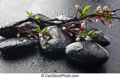 Bagnato, zen, terme, pietre, e, primavera, fiore
