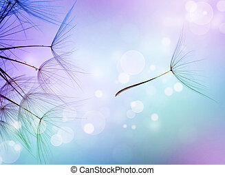 Beautiful Abstract Flying Dandelion Seeds