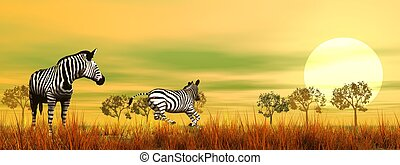 Zebras in the savannah by beautiful sunset