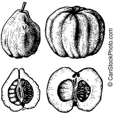 Plant Pseudocydonia - Fruit of Plant Pseudocydonia Chinese...