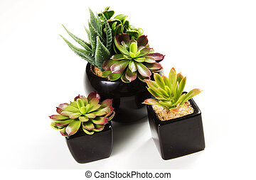 succulent plants on a white background