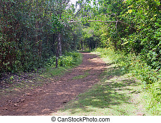 """The road in the wood,  Park """" Black river Gorge """". Mauritius"""