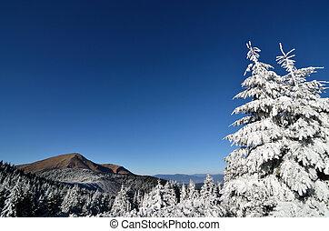 abete, nubi, albero, neve, foschia, montagne, primo