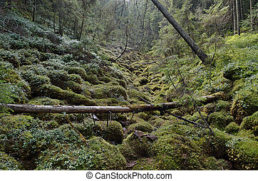 european rain forest with fallen trees and wet moss