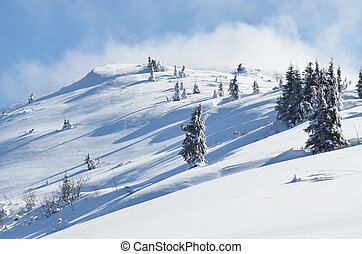 Winter calm mountain landscape with snow covered firs on...