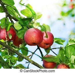 新鮮, 有机, 蘋果
