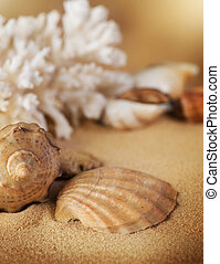 Shells Closeup