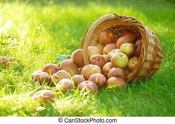 健康, 籃子, 有机, 蘋果