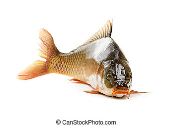 Carp has tasty dietary meat. Fishing carp great pleasure.