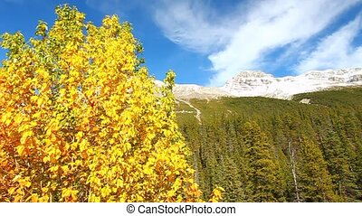 Banff National Park Fall Colors - Beautiful fall colors in...