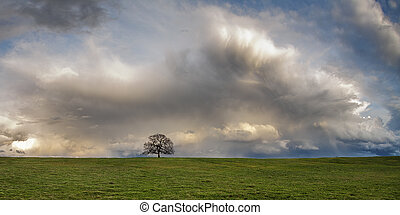 Lone oak tree and clouds