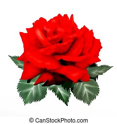 Hand Drawing of Red Rose Isolated on White Background