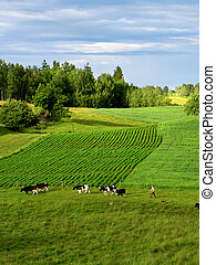 spring landscape - green spring landscape
