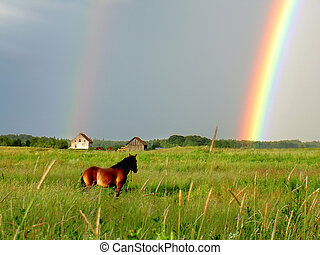 horse sees a rainbow after storm