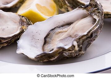 Oysters On A Plate - Oysters and Lemon on a plate