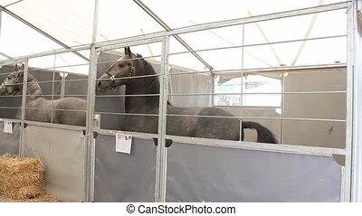 disturbed stallion in box