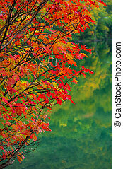 autumn leaves - Plant series autumn leaves for image of...