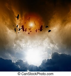 Ravens in dark sky - Sunset, flock of flying ravens, crows...