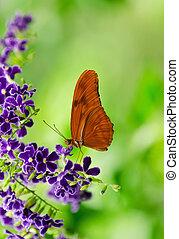 Orange Longwing butterfly - Orange Longwing (Dryas iulia)...