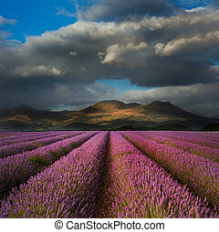 Dramatic sky over landscape of mountain range with lavender field in foreground