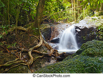 Creek in tropical forest  Beautiful landscape with trees, mossy stones and green plants  Adventure background