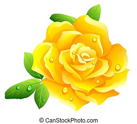 Yellow rose - illustration of yellow rose isolated on white