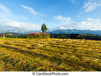 Summer mountain evening country view with mown field and...