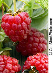 Raspberry on wood background