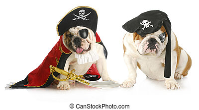 dog pirates - two english bulldogs dressed up in pirate...
