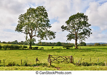 Trees and a field gate in rural English landscape - A...