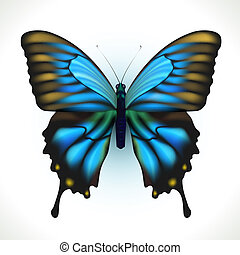 Butterfly - Realistic bright Butterfly isolated on white....