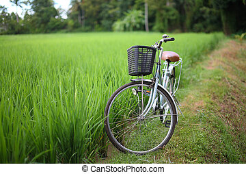 bicycle in rice paddy, asia -Thailand - bicycle in rice...