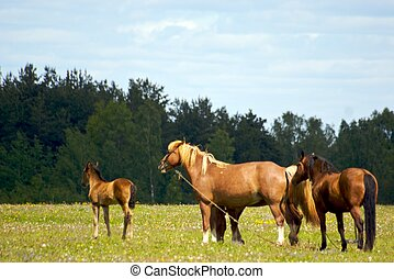 Horses family in the willage