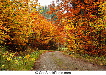 autumn road in forrest - colored trees and autumn road in...