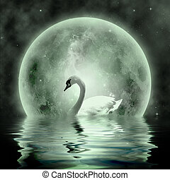 Swan - Moonlight  Swan- beautiful swan under the moonlight