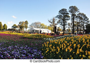 canberra floriade festival in australia started in end...