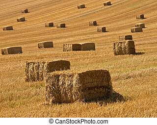 Straw bales background - A farm field in the countryside...