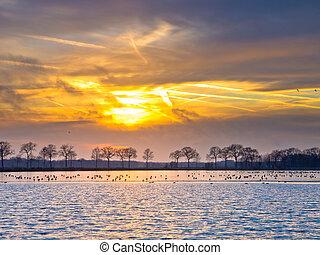 Ducks on a frozen lake