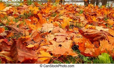 autumn leaves of grass, slider